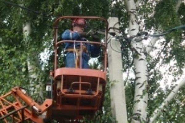 В Липецке c начала года ликвидировано около 2000 аварийных деревьев