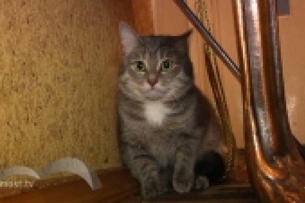 Квартиру Николая Корвякова в Липецке затопило кошачьими фекалиями