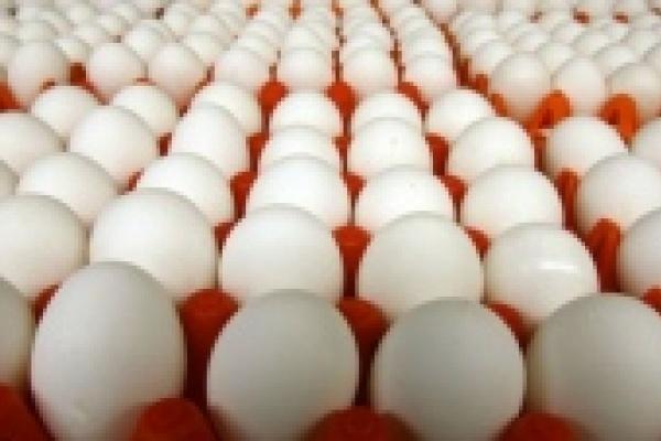 Антимонопольщики выяснили, почему в Липецкой области дорожали яйца