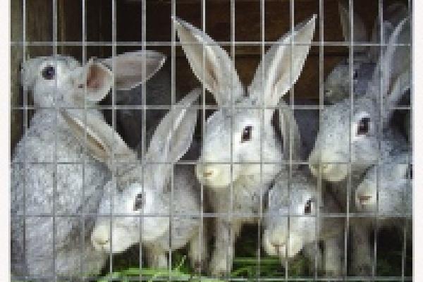 Кроликов за 1, 2 млрд рублей решили не разводить