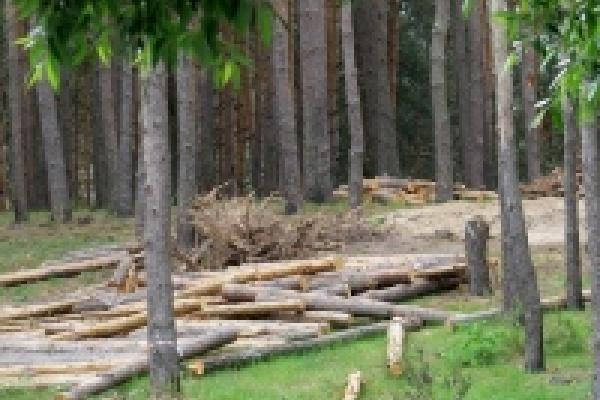 Сразу два уголовных дела оказались связаны с туристическим кластером в Липецке