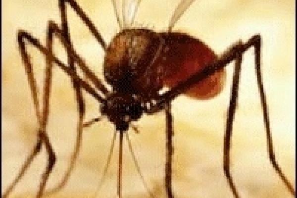 В Липецкой области два человека заболели малярией