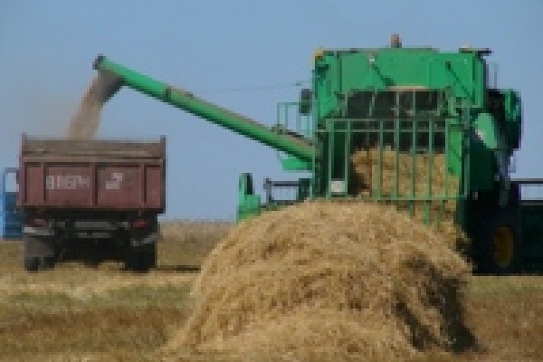 В закромах уже миллион тонн зерна!