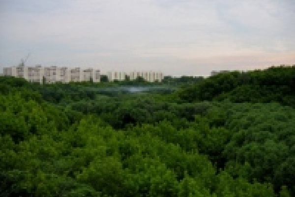 Каменный лог превратят в самый большой парк