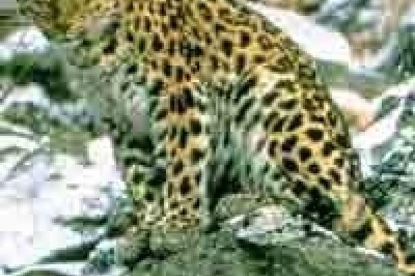 В зоопарке Липецка появились новые питомцы