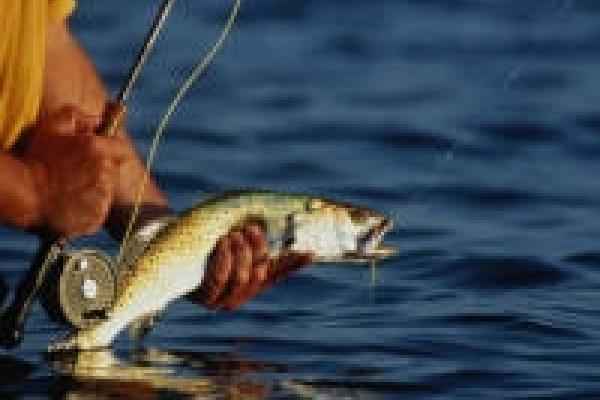 Рыбинспекция подсчитывает «трофеи»