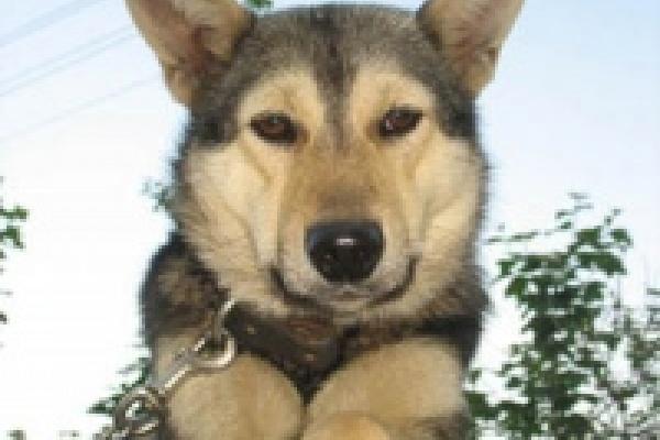 В Липецке собакам вживляют микрочипы