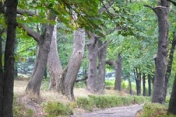 Депутаты горсовета встали на защиту деревьев