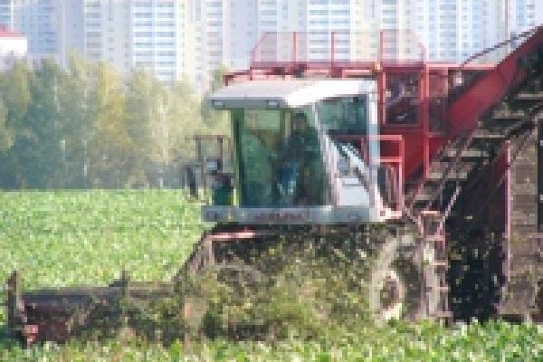 Хороший урожай сахарной свёклы