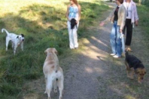 В Липецке до сих пор определено только одно место для выгула собак