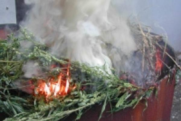 В Липецке сожгли коноплю