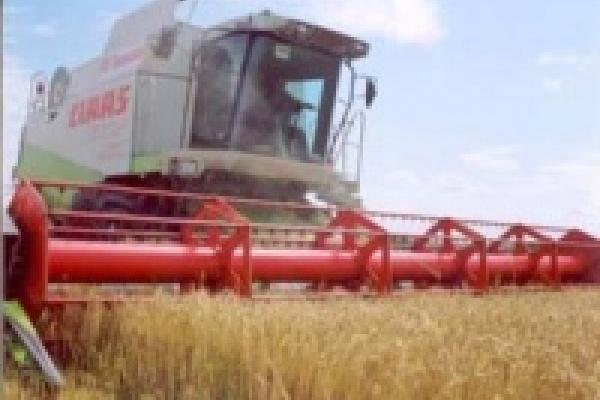 В Липецкой области уже намолочено больше 700 тысяч тонн зерна