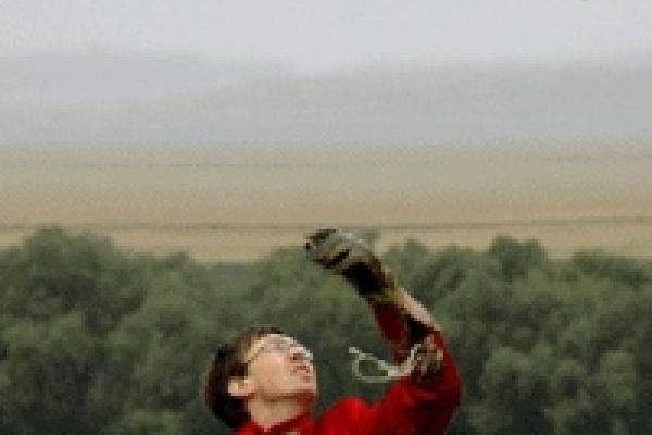 В Липецкой области пройдет шоу соколов