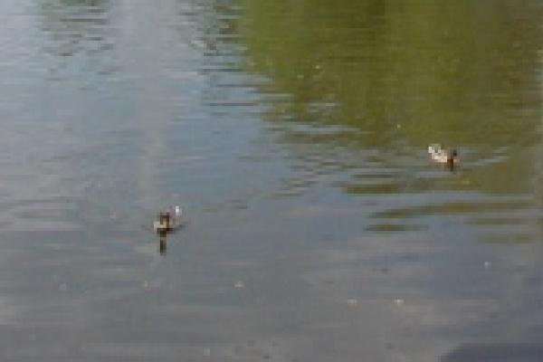 Пьяный парень на пруду