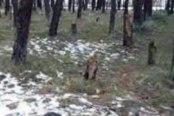 В 90-летнем лесу порубили деревья