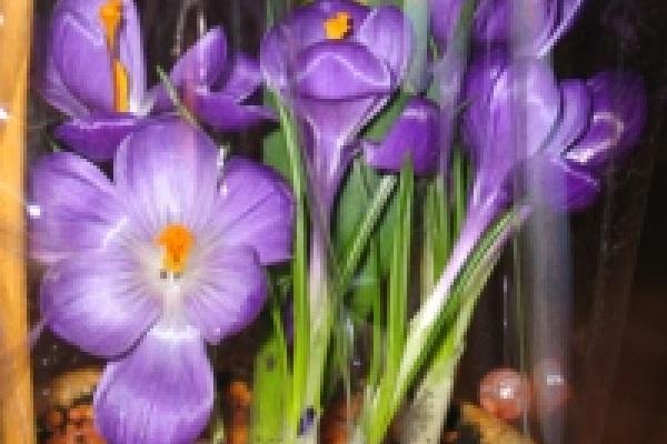 В «Зеленхозе» вырастили на 4 тысячи цветов больше