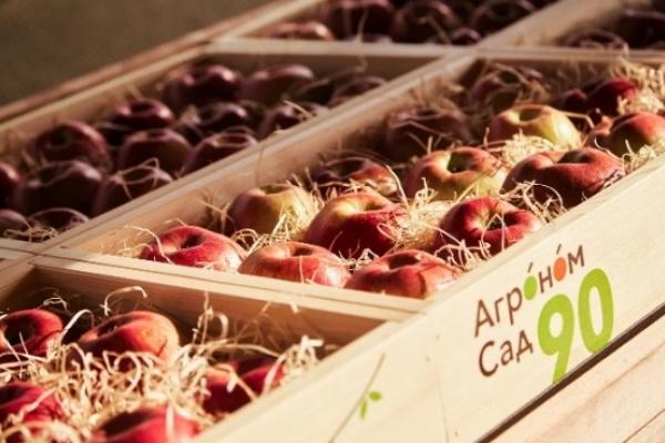 Крупнейший липецкий производитель яблок завалит продукцией столичную сеть супермаркетов
