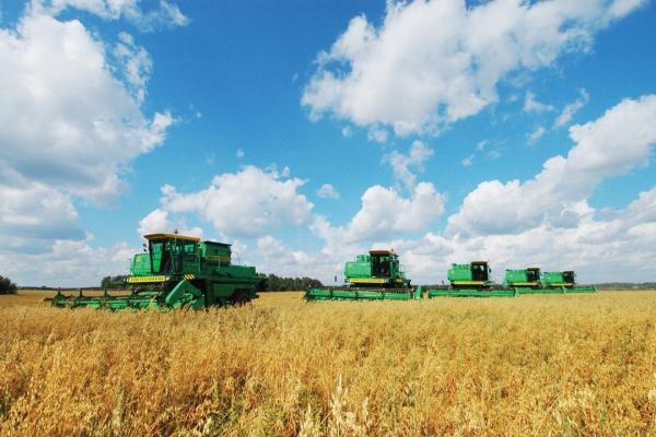 Объём выпуска продукции сельского хозяйства Липецкой области достиг 77 млрд. рублей