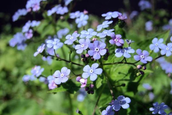 Липецкие чиновники отсудили у подрядчика 4,5 млн рублей за неправильную посадку растений
