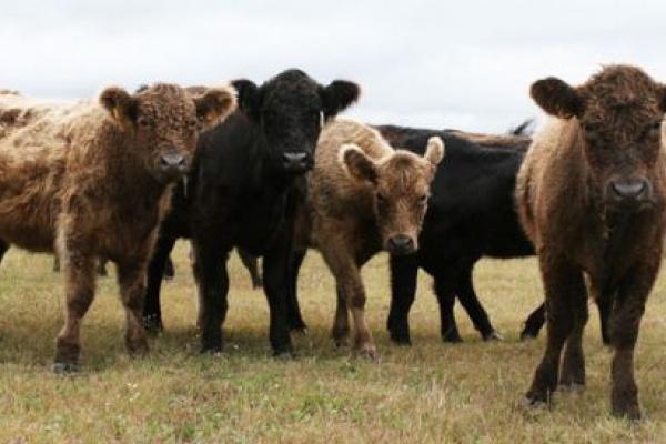 В Липецкой области открылся животноводческий селекционный комплекс за 370 млн рублей