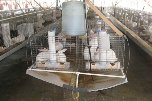 Компания «Танаис» планируют за 155 млн. рублей построить кролиководческий комплекс