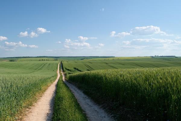 За грубые нарушения земельного законодательства липецкая агропромышленная компания заплатит штраф