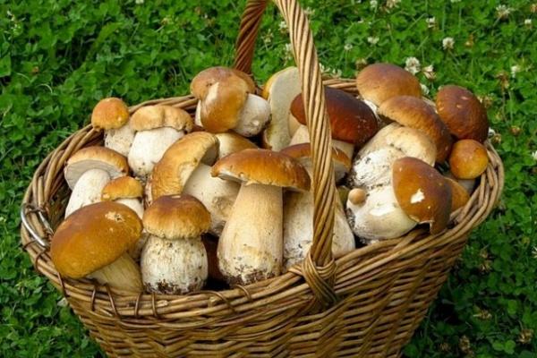 Компания «Черноземье» планирует возвести грибной комплекс в Липецкой области за 5 млрд рублей