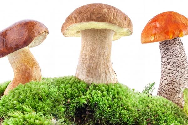 Липецкие власти окончательно потеряли надежду построить в ОЭЗ «Астапово» грибной комплекс за 1,7 млрд рублей
