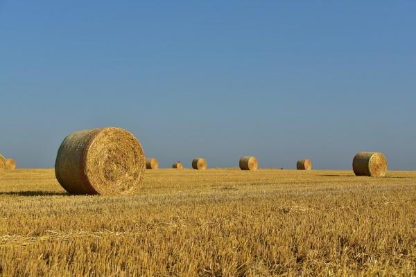 Кадастровая оценка земель сельхозназначения пройдет в Липецкой области в 2019 году