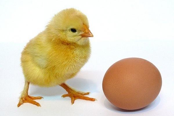 В Липецкой области построят птицефабрику для производства инкубационного яйца