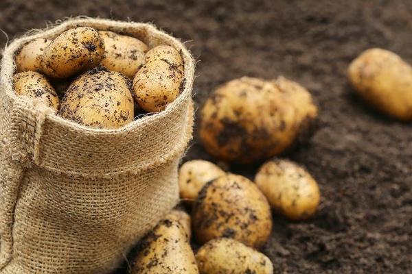 Подразделение ГК «ТРИО» в Липецкой области запустит современное картофелехранилище в 2017 году