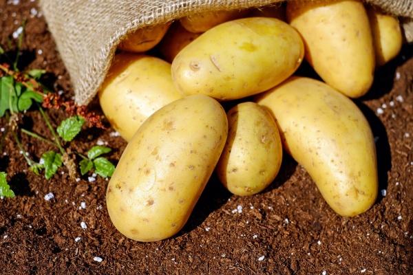 Столетней липецкой картофельной компании дали ещё полгода на расчёт с кредиторами