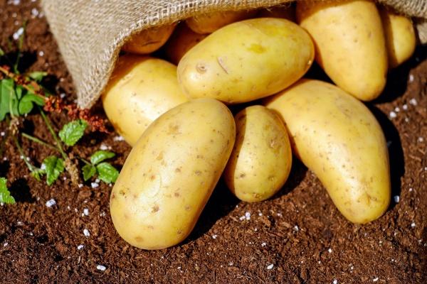 Столетняя липецкая картофельная станция не привлекла покупателей своими активами
