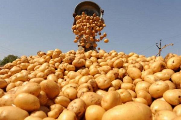 Холдинг «Белая дача» решил управлять созданным под проект картофельного завода ООО «Белая дача Липецк»