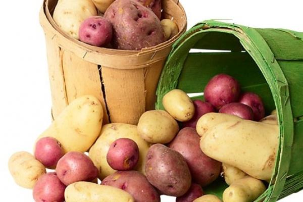 В Липецкий картофель инвестируют  8,8 млрд. рублей до 2020 года
