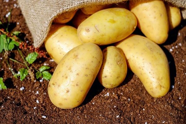 Столетняя липецкая картофельная компания попросила у суда еще полгода на расчеты с кредиторами