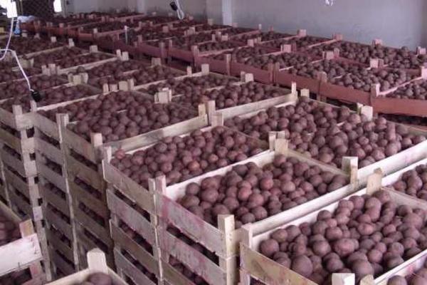 Black Earth Farming переоценила ущерб от пожара на складе картофеля в Липецкой области с 7 до 2,5 млн долларов