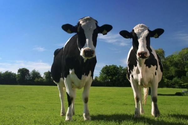 Липецкий «КолоСС» завершает строительство молочного комплекса за 420 млн рублей