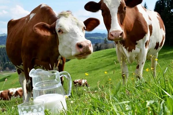 Липецкая «Экоптица» вложит 2,1 млрд рублей в строительство молочных ферм и сырного завода