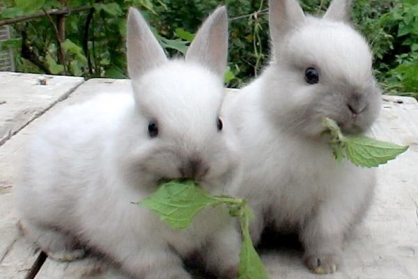 Компания «Липецкий кролик» приступила к возведению кролиководческого комплекса за 256 млн рублей