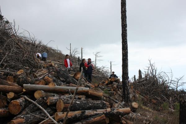 В Липецкой области построят завод по переработке древесины