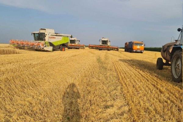 СХП «Мокрое» собирает посевы на полях фермеров в Липецкой области вопреки решению суда
