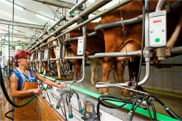 «РосАгроАльянс» никак не может построить молочный комплекс за 1 млрд. рублей