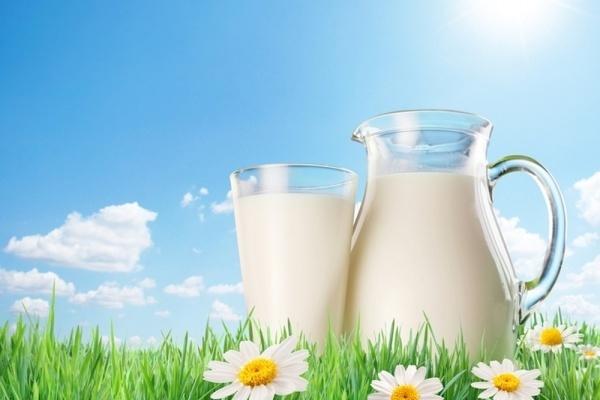 Липецкая «Агрофирма «ТРИО» пробилась в ТОП-30 производителей молока России по рентабельности