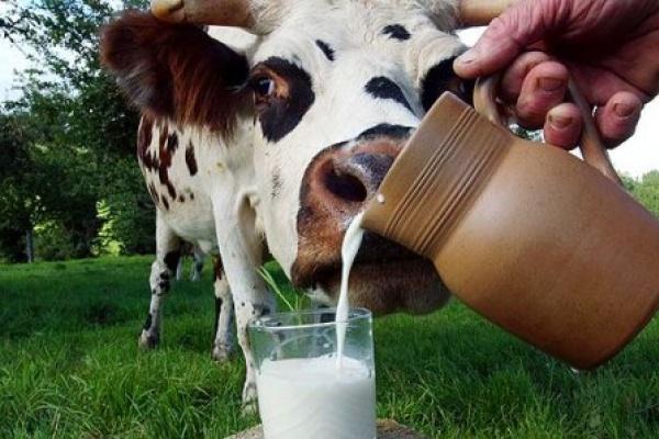 Липецкая область едва не стала аутсайдером по размеру субсидий на развитие молочного животноводства в Черноземье