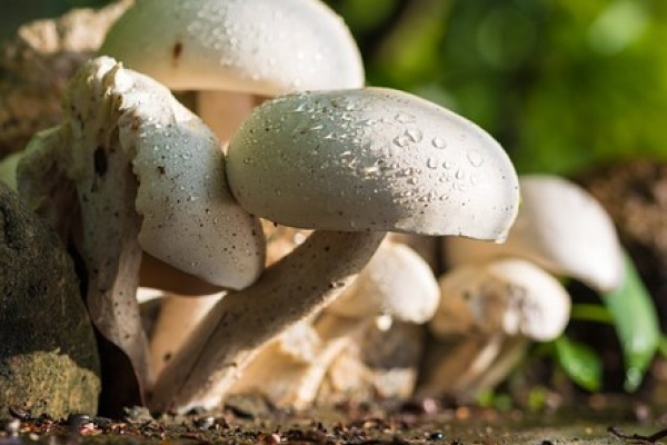 Информацию в СМИ о строительстве грибного комплекса за 5 млрд рублей липецкое «Черноземье» считает «уткой»