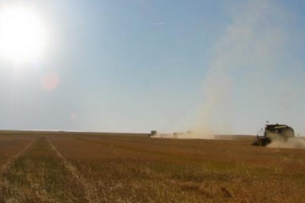 Шведская группа Black Earth Farming, в прямой собственности которой находятся земли в Липецкой области, испытывает влияние санкций