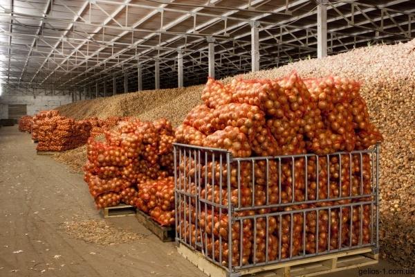 Компания «Агрорегион» выставила на продажу недостроенное овощехранилище в Липецкой области за 550 млн рублей