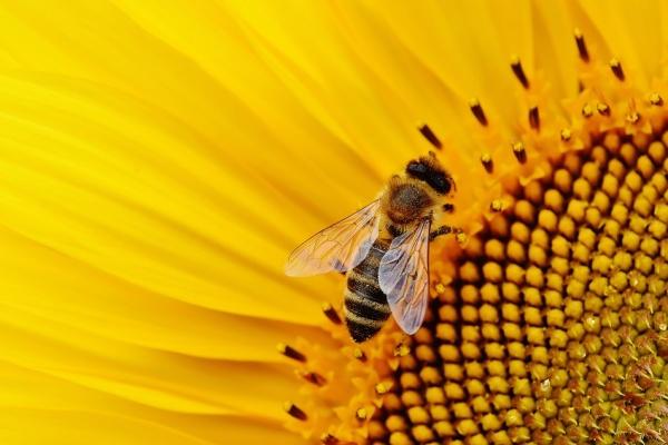 Компенсацию потерявшим пчёл липецким пасечникам увеличили на 1,2 млн рублей