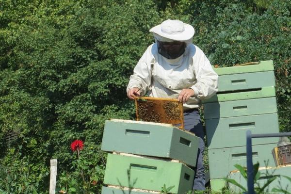 Липецкие пчеловоды обратятся с просьбой к властям о матпомощи в связи с массовой гибелью пчёл